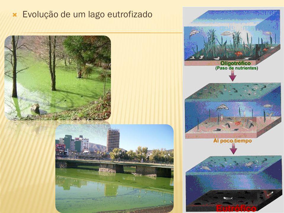 Evolução de um lago eutrofizado