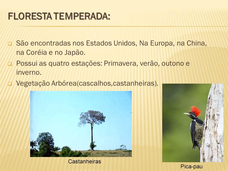 FLORESTA TEMPERADA: São encontradas nos Estados Unidos, Na Europa, na China, na Coréia e no Japão. Possui as quatro estações: Primavera, verão, outono