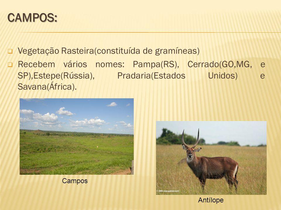 CAMPOS: Vegetação Rasteira(constituída de gramíneas) Recebem vários nomes: Pampa(RS), Cerrado(GO,MG, e SP),Estepe(Rússia), Pradaria(Estados Unidos) e