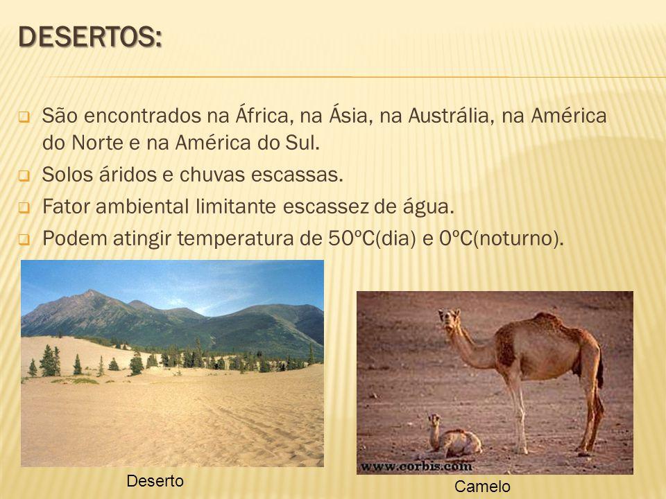 DESERTOS: São encontrados na África, na Ásia, na Austrália, na América do Norte e na América do Sul. Solos áridos e chuvas escassas. Fator ambiental l