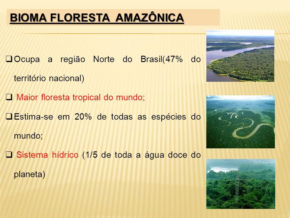 BIOMA FLORESTA AMAZÔNICA Ocupa a região Norte do Brasil(47% do território nacional) Maior floresta tropical do mundo; Estima-se em 20% de todas as esp