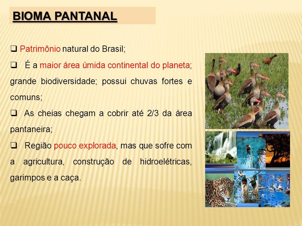 Patrimônio natural do Brasil; É a maior área úmida continental do planeta; grande biodiversidade; possui chuvas fortes e comuns; As cheias chegam a co