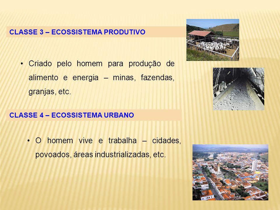 Criado pelo homem para produção de alimento e energia – minas, fazendas, granjas, etc. CLASSE 3 – ECOSSISTEMA PRODUTIVO CLASSE 4 – ECOSSISTEMA URBANO