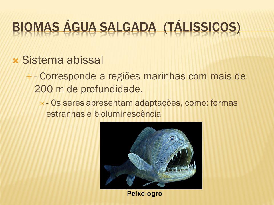 Sistema abissal - Corresponde a regiões marinhas com mais de 200 m de profundidade. - Os seres apresentam adaptações, como: formas estranhas e biolumi