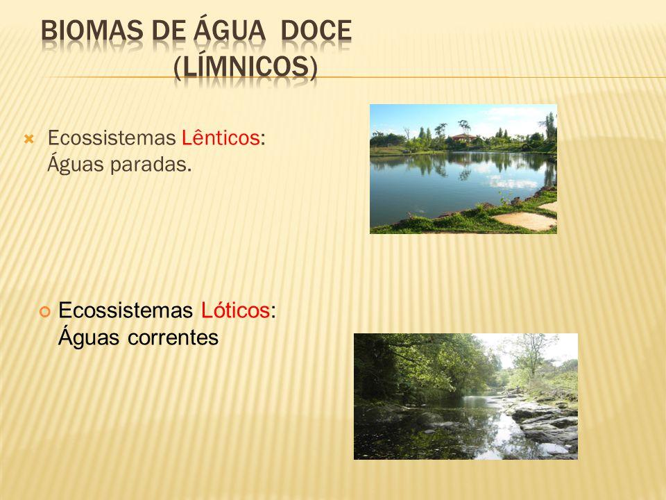 Ecossistemas Lênticos: Águas paradas. Ecossistemas Lóticos: Águas correntes