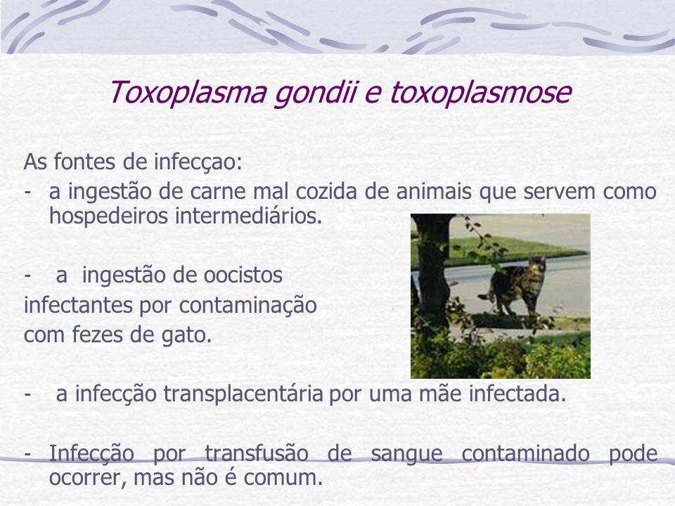 Toxoplasma gondii e toxoplasmose As fontes de infecçao: - a ingestão de carne mal cozida de animais que servem como hospedeiros intermediários.