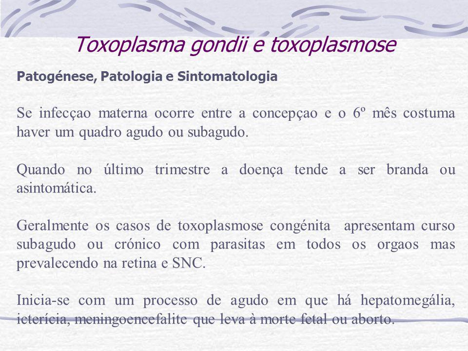Toxoplasma gondii e toxoplasmose Patogénese, Patologia e Sintomatologia Se infecçao materna ocorre entre a concepçao e o 6º mês costuma haver um quadro agudo ou subagudo.