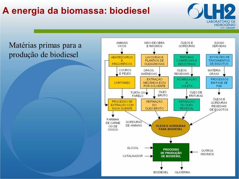 A energia da biomassa: biodiesel Matérias primas para a produção de biodiesel