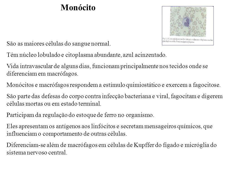 Monócito São as maiores células do sangue normal. Têm núcleo lobulado e citoplasma abundante, azul acinzentado. Vida intravascular de alguns dias, fun