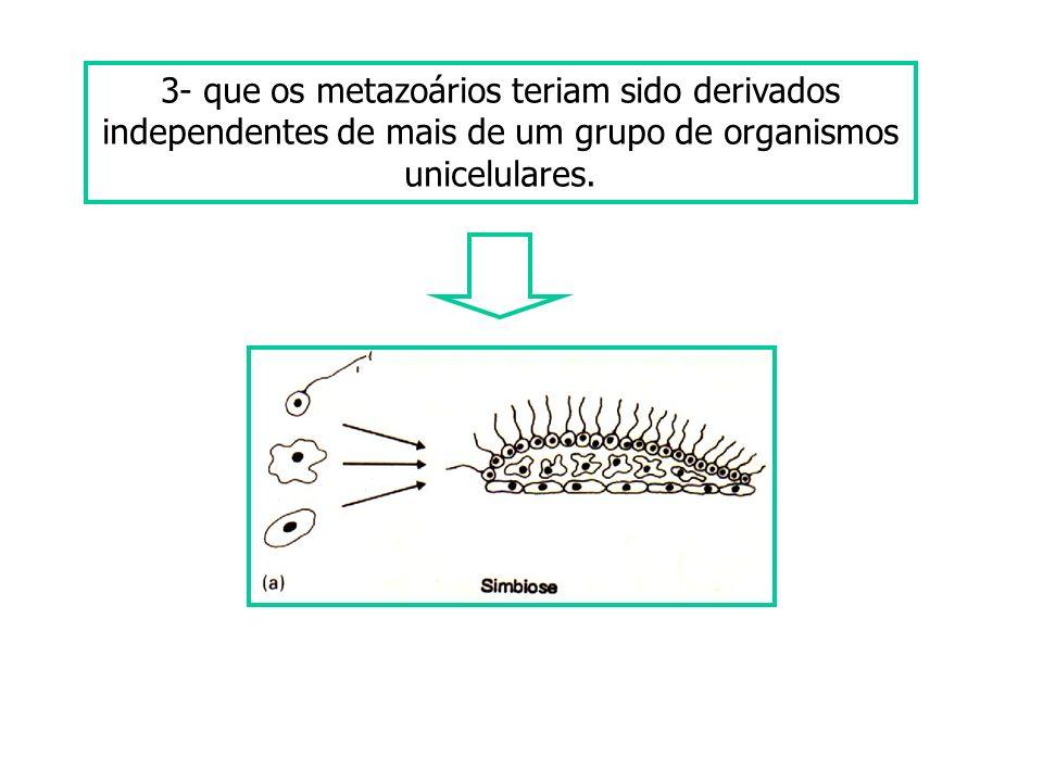 3- que os metazoários teriam sido derivados independentes de mais de um grupo de organismos unicelulares.