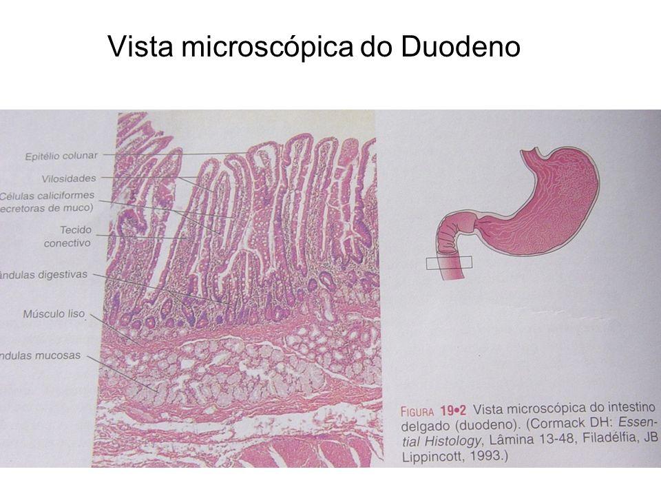 Vista microscópica do Duodeno
