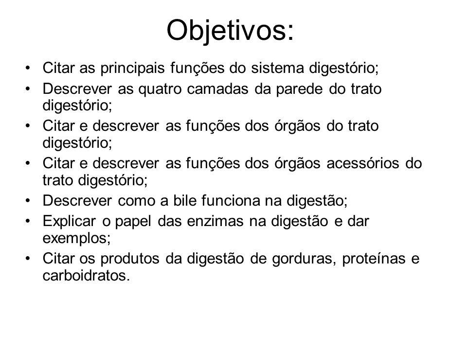 Objetivos: Citar as principais funções do sistema digestório; Descrever as quatro camadas da parede do trato digestório; Citar e descrever as funções
