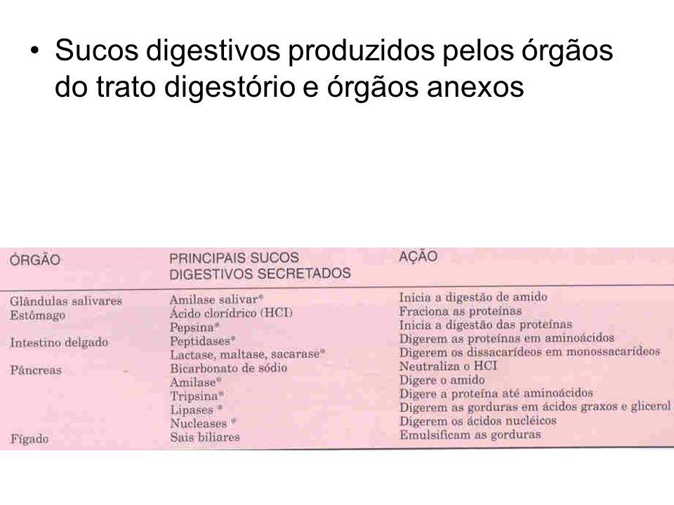 Sucos digestivos produzidos pelos órgãos do trato digestório e órgãos anexos