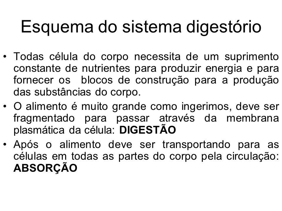 Esquema do sistema digestório Todas célula do corpo necessita de um suprimento constante de nutrientes para produzir energia e para fornecer os blocos