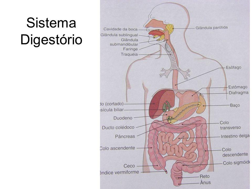 Processos do sistema digestório