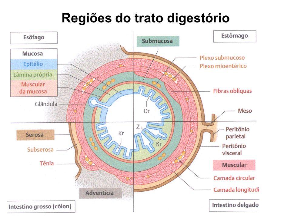 Controle Hormonal na digestão Produção e função da secreção de 4 hormônios com # papéis na digestão HormônioLocal de produção Agente- fator estimulantefunção GastrinaAntro pilórico e mucosa intestinal -Distensão do antro pilórico; -Estimulação vagal; -Produtos da digestão das proteínas; - álcool; Estimula a secreção e motilidade gástrica Peptídeos inibidores gástricos Mucosa duodenal e jejunal -ácido gástrico; -gorduras; - produtos da digestão das gorduras Inibe a secreção e a motilidade gástrica SecretinaMucosa duodenal e jejunal -Ácido gástrico; -produtos da digestão das gorduras; -produtos da digestão de proteínas Estimula a secreção da bile e do fluido pancreático alcalino ColecistocininaMucosa duodenal e jejunal -produtos da digestão de gorduras; -Produtos da digestão de proteínas Estimula a contração da vesícula biliar e a secreção de líquido pancreático rico em enzimas.