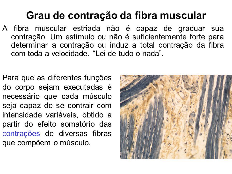 Grau de contração da fibra muscular A fibra muscular estriada não é capaz de graduar sua contração. Um estímulo ou não é suficientemente forte para de