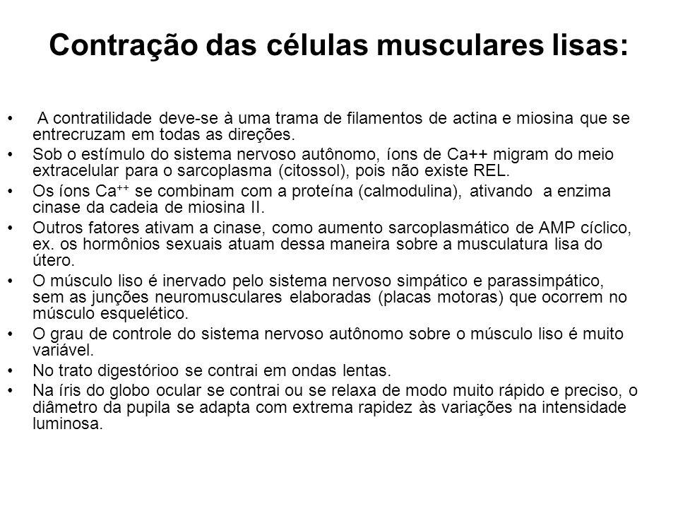 Contração das células musculares lisas: A contratilidade deve-se à uma trama de filamentos de actina e miosina que se entrecruzam em todas as direções
