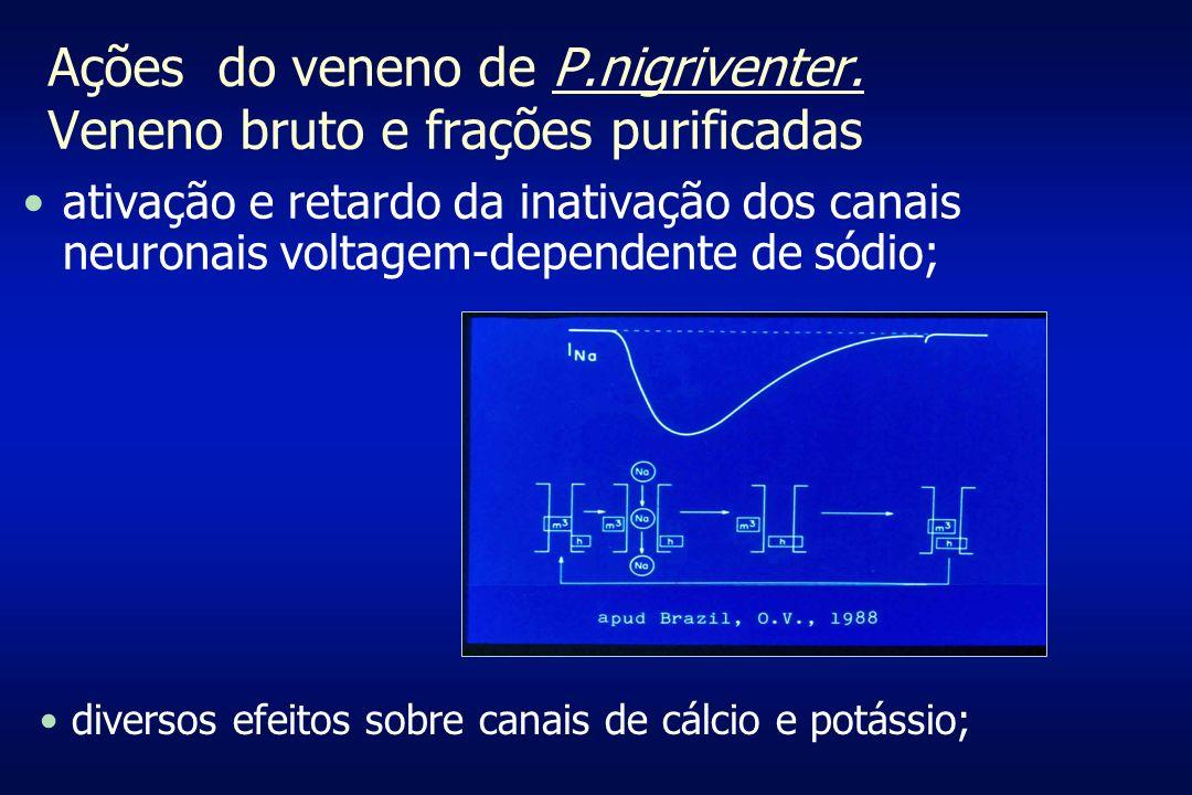 Ações do veneno de P.nigriventer. Veneno bruto e frações purificadas ativação e retardo da inativação dos canais neuronais voltagem-dependente de sódi