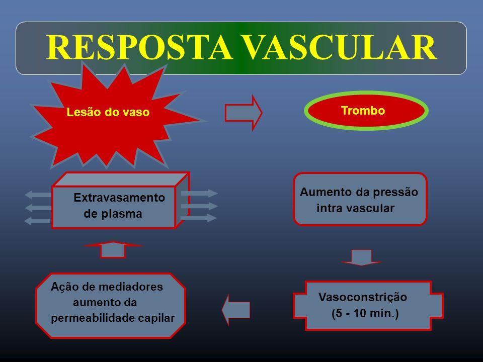 Lesão do vaso Trombo Extravasamento de plasma Ação de mediadores aumento da permeabilidade capilar Vasoconstrição (5 - 10 min.) Aumento da pressão int