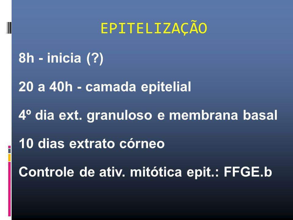 8h - inicia (?) 20 a 40h - camada epitelial 4º dia ext. granuloso e membrana basal 10 dias extrato córneo Controle de ativ. mitótica epit.: FFGE.b EPI
