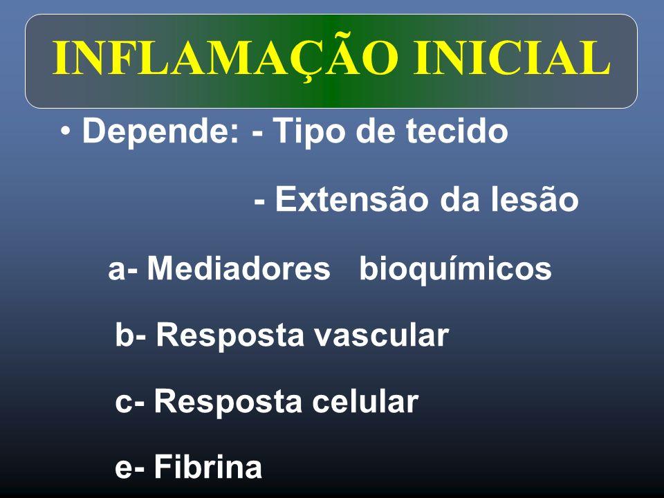 INFLAMAÇÃO INICIAL Depende: - Tipo de tecido - Extensão da lesão a- Mediadores bioquímicos b- Resposta vascular c- Resposta celular e- Fibrina