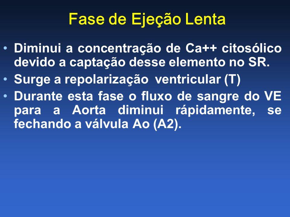 Fase de Ejeção Lenta Diminui a concentração de Ca++ citosólico devido a captação desse elemento no SR. Surge a repolarização ventricular (T) Durante e