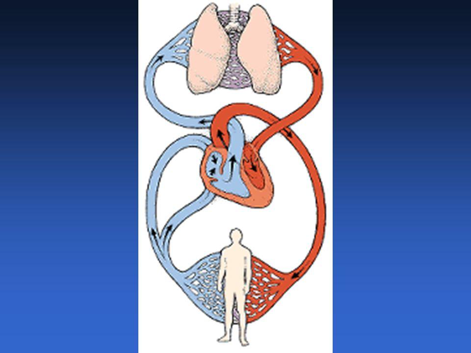 Pulso Arterial.