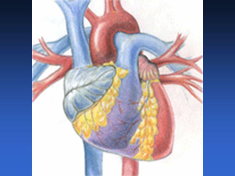 Excitación rítmica del corazón Funciones: Genera impulsos de manera rítmica que producen la contracción periódica del músculo cardiaco Conducción de los impulsos a todo el miocardio.