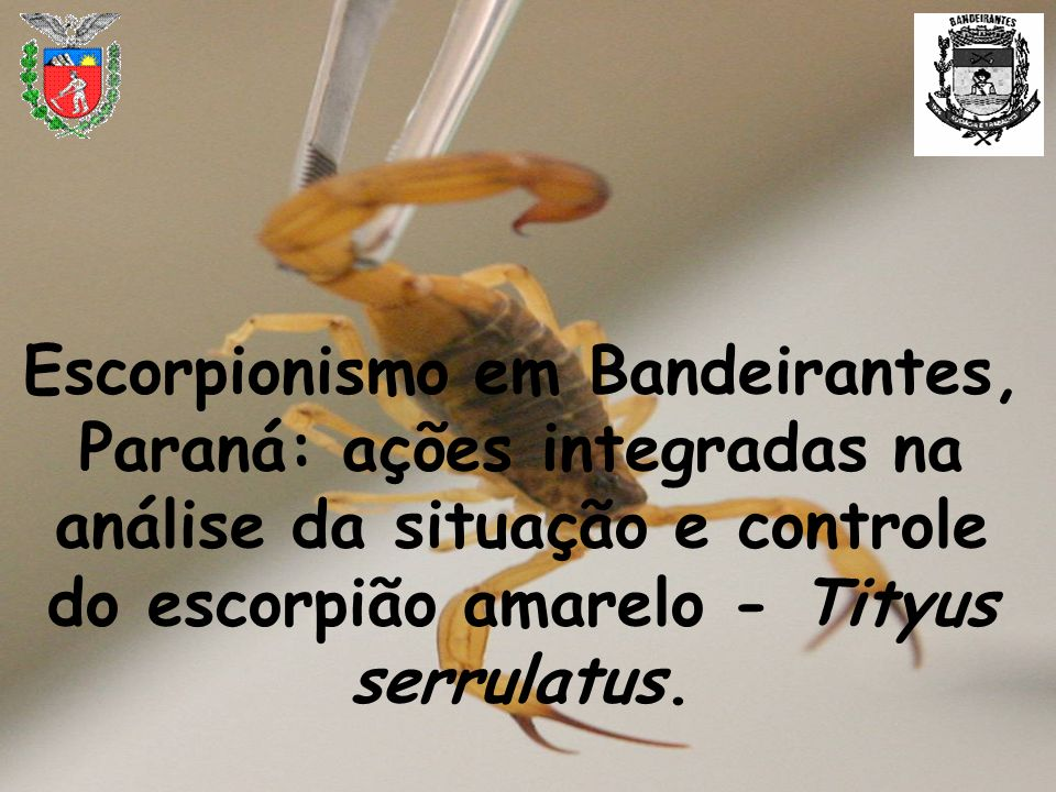 Escorpionismo em Bandeirantes, Paraná: ações integradas na análise da situação e controle do escorpião amarelo - Tityus serrulatus.