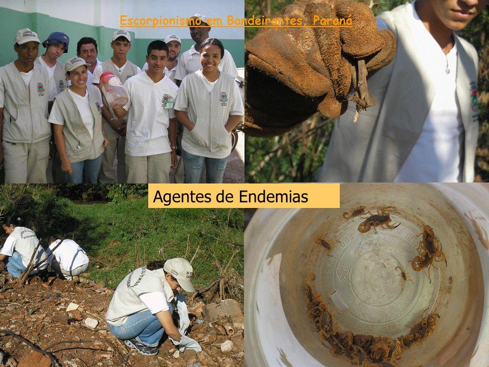 Agentes de Endemias Escorpionismo em Bandeirantes, Paraná