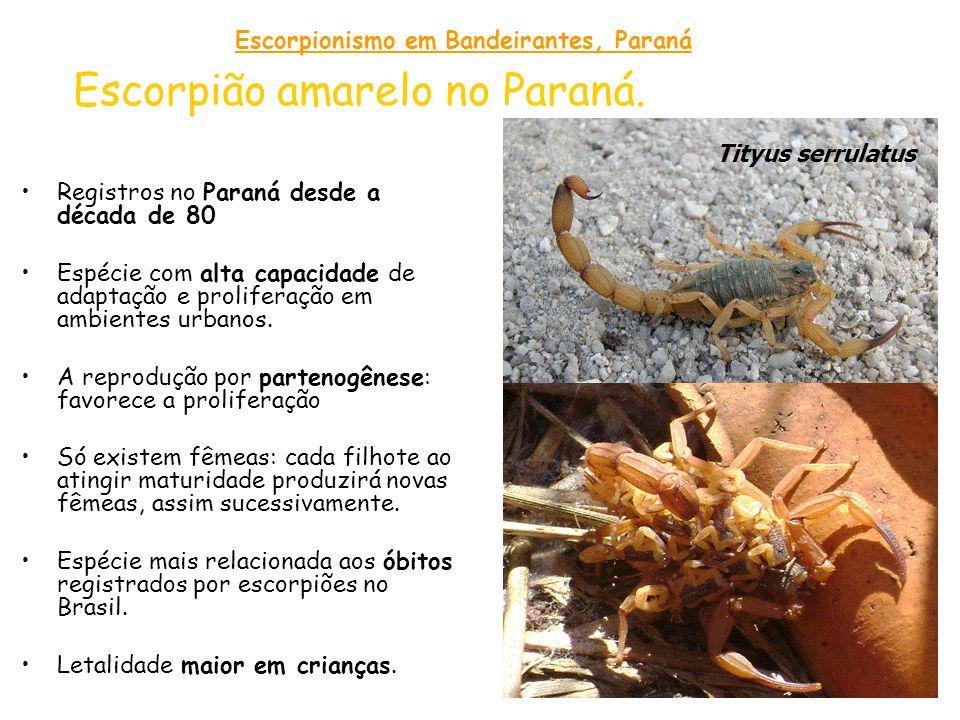 Escorpião amarelo no Paraná. Registros no Paraná desde a década de 80 Espécie com alta capacidade de adaptação e proliferação em ambientes urbanos. A