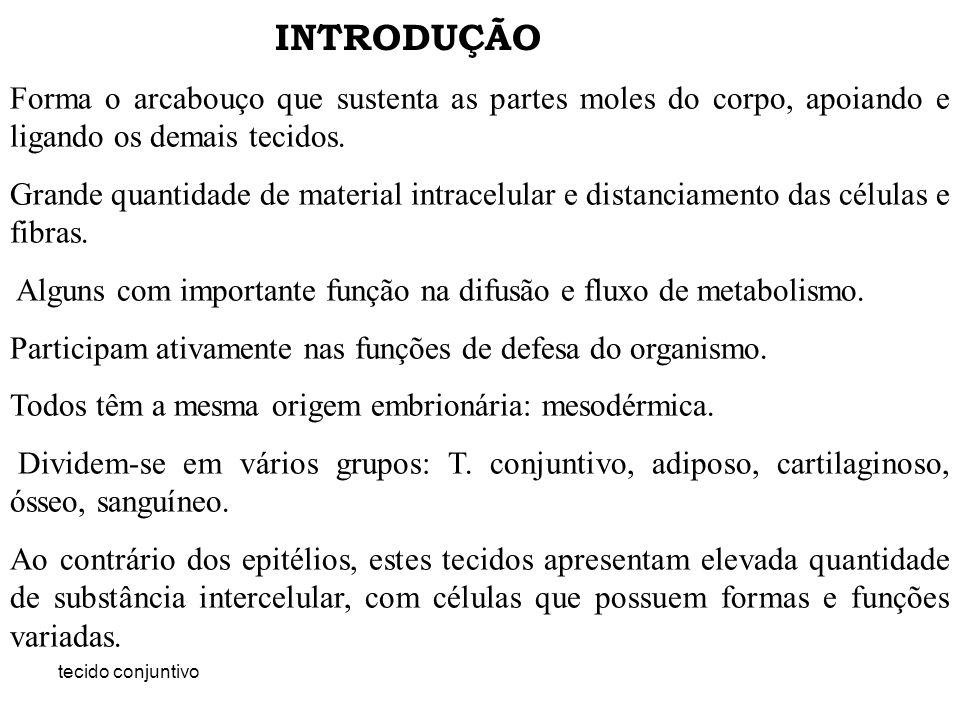tecido conjuntivo esquema