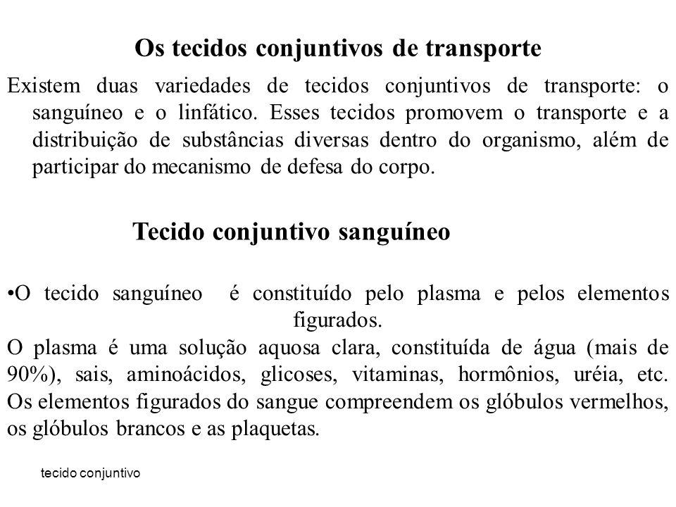 tecido conjuntivo Os tecidos conjuntivos de transporte Existem duas variedades de tecidos conjuntivos de transporte: o sanguíneo e o linfático. Esses