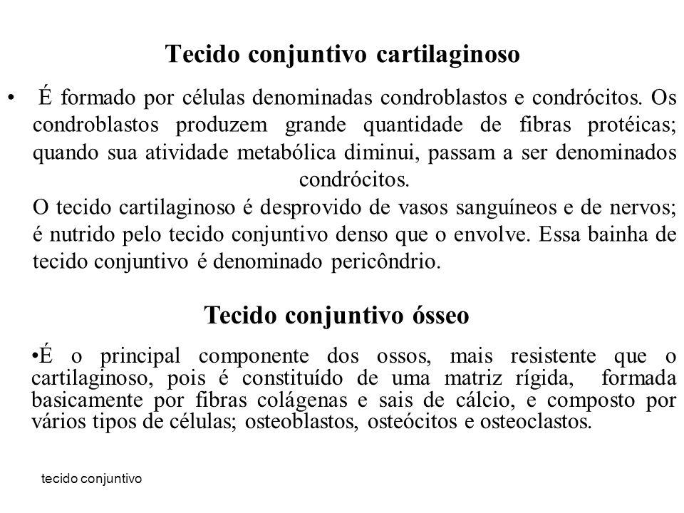 tecido conjuntivo Tecido conjuntivo cartilaginoso É formado por células denominadas condroblastos e condrócitos. Os condroblastos produzem grande quan