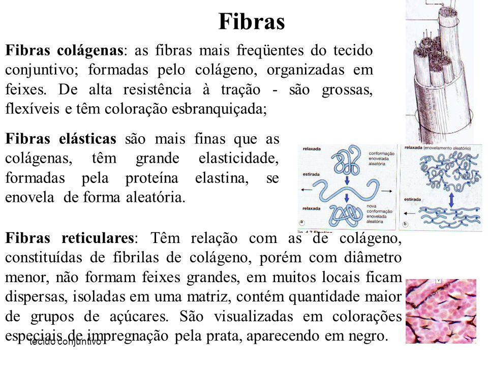 tecido conjuntivo Fibras Fibras colágenas: as fibras mais freqüentes do tecido conjuntivo; formadas pelo colágeno, organizadas em feixes. De alta resi