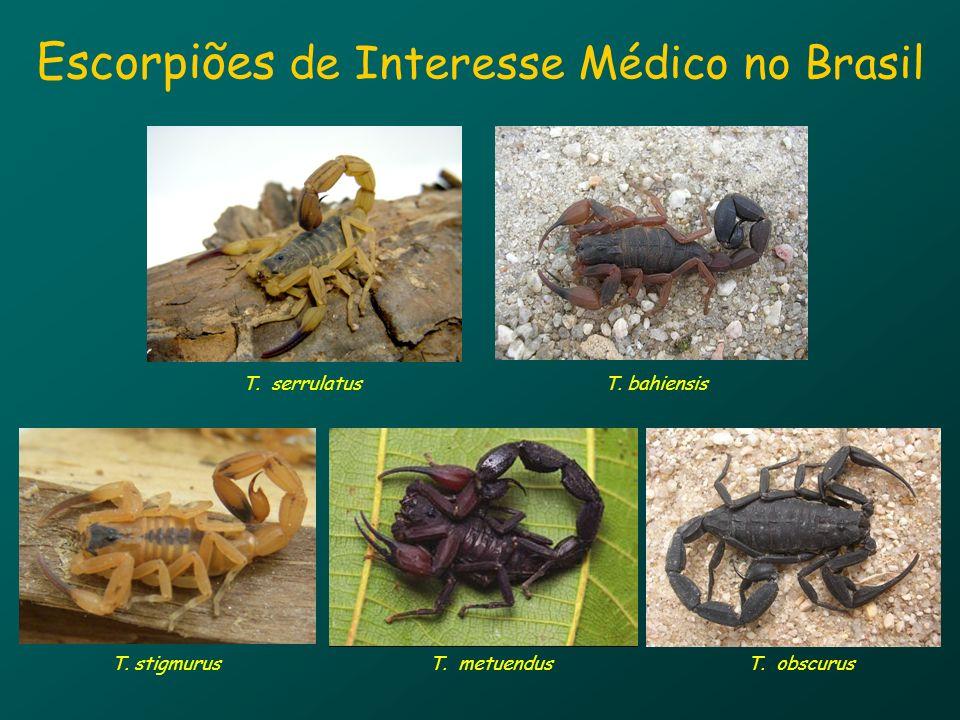 Escorpiões de Interesse Médico no Brasil T. serrulatus T. bahiensis T. stigmurusT. obscurusT. metuendus