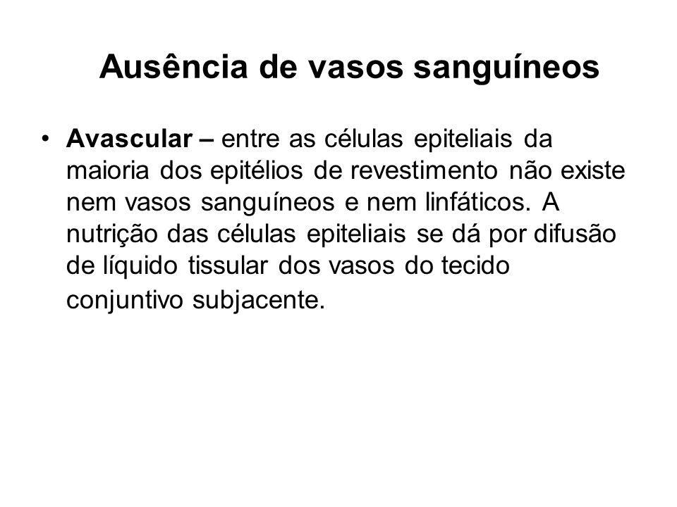 Ausência de vasos sanguíneos Avascular – entre as células epiteliais da maioria dos epitélios de revestimento não existe nem vasos sanguíneos e nem li