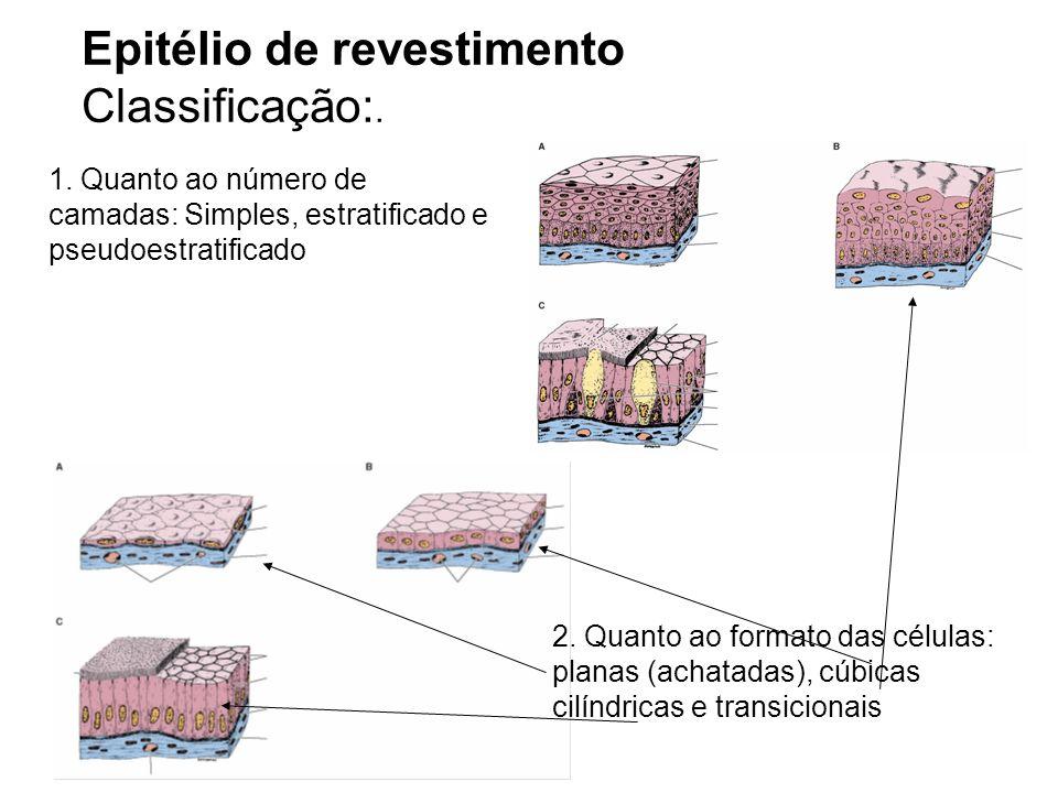 Epitélio de revestimento Classificação:. 1. Quanto ao número de camadas: Simples, estratificado e pseudoestratificado 2. Quanto ao formato das células