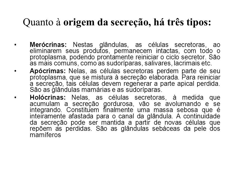 Quanto à origem da secreção, há três tipos: Merócrinas: Nestas glândulas, as células secretoras, ao eliminarem seus produtos, permanecem intactas, com