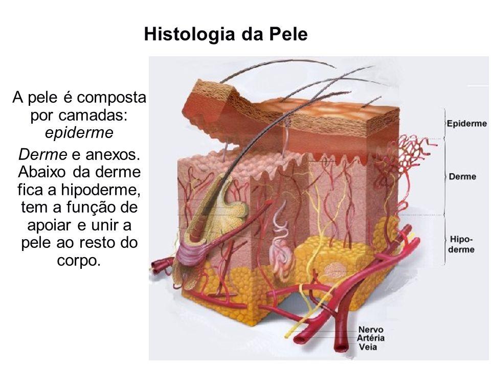 Histologia da Pele A pele é composta por camadas: epiderme Derme e anexos. Abaixo da derme fica a hipoderme, tem a função de apoiar e unir a pele ao r