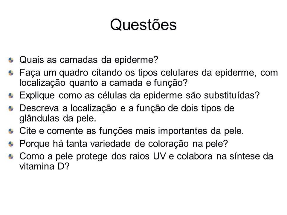 Questões Quais as camadas da epiderme? Faça um quadro citando os tipos celulares da epiderme, com localização quanto a camada e função? Explique como