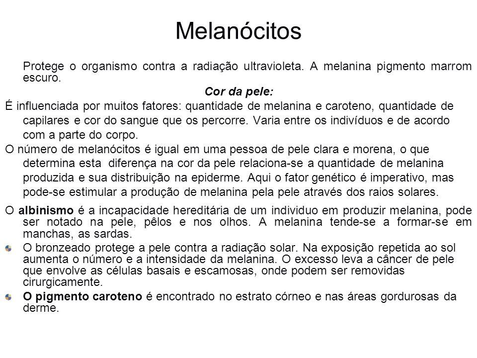 Melanócitos Protege o organismo contra a radiação ultravioleta. A melanina pigmento marrom escuro. Cor da pele: É influenciada por muitos fatores: qua