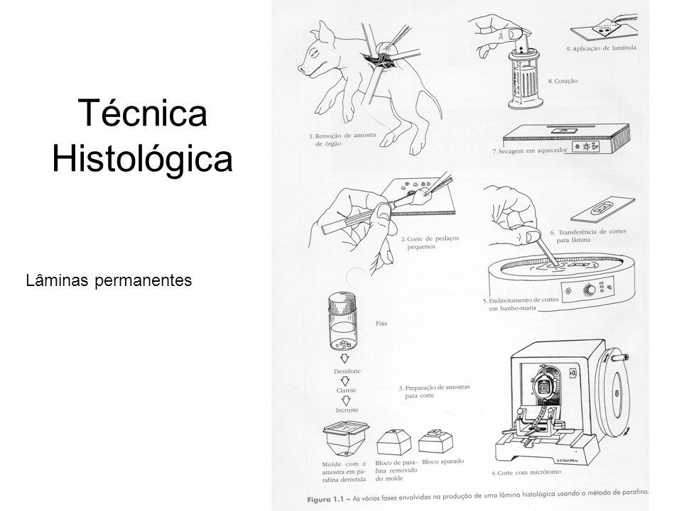 Técnica Histológica Lâminas permanentes