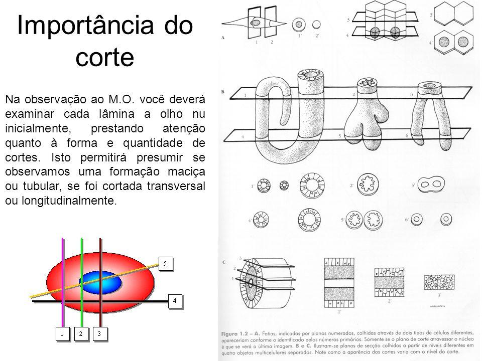 Importância do corte Na observação ao M.O. você deverá examinar cada lâmina a olho nu inicialmente, prestando atenção quanto à forma e quantidade de c