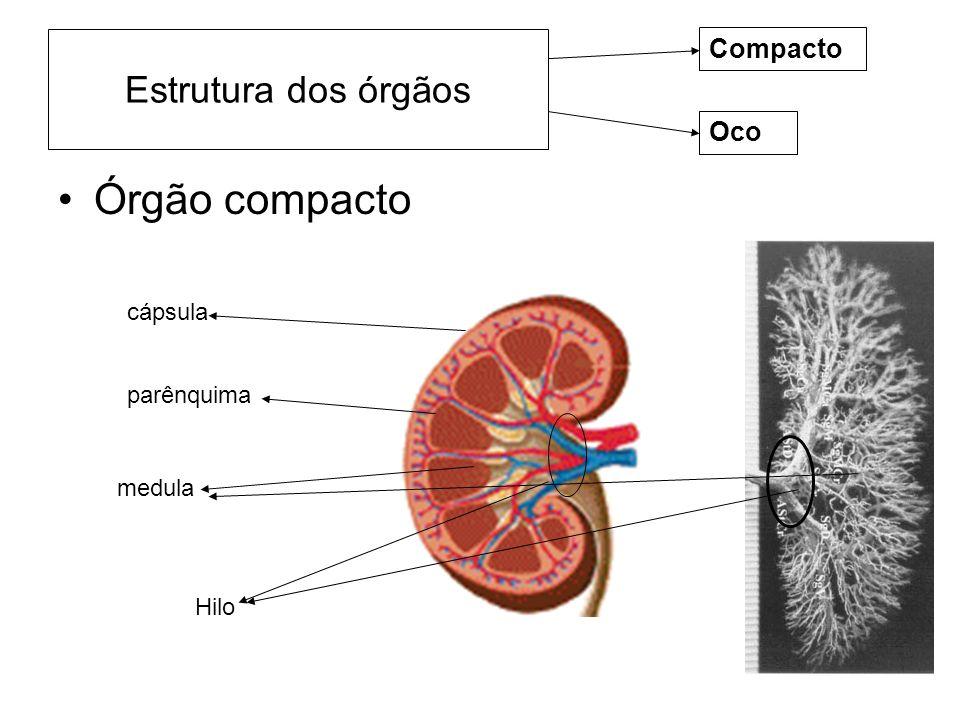 Estrutura dos órgãos Órgão compacto Compacto Oco cápsula parênquima medula Hilo