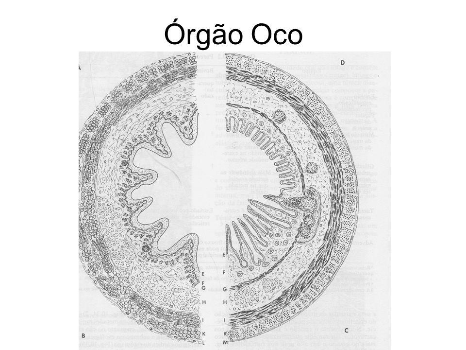 Órgão Oco