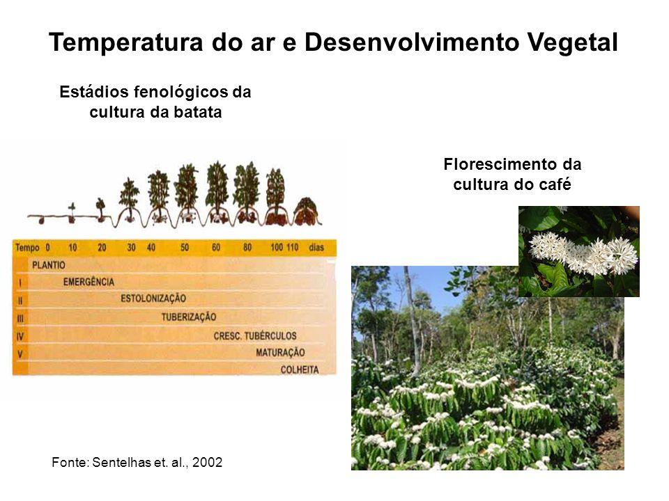 Temperatura do ar e Desenvolvimento Vegetal Estádios fenológicos da cultura da batata Florescimento da cultura do café Fonte: Sentelhas et. al., 2002