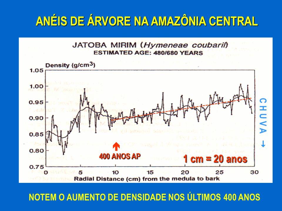 ANÉIS DE ÁRVORE NA AMAZÔNIA CENTRAL NOTEM O AUMENTO DE DENSIDADE NOS ÚLTIMOS 400 ANOS ---------------------------------------------- C H U V A 400 ANO