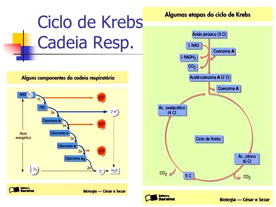 Ciclo de Krebs Cadeia Resp.